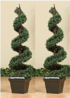 4' Potted Boxwood Topiary Spiral Tree-Set of 2 >>> Want additional info? Click on the image.