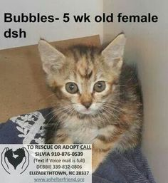 SUPER URGENT: all kittens & cats have upper resp. Infections. Need adoption, rescue, foster by 9am tomorrow (Mon) or they DIE!