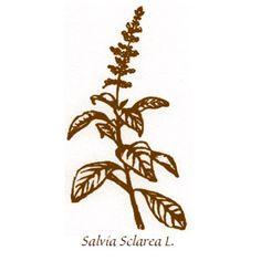 Salvia Sclarea elisir efficace nella cura delle infiammazioni dello stomaco accompagnate da scarso appetito e nausea. Utile anche nel controllo delle vampate da menopausa.