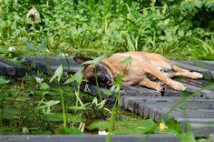 Sappiamo tutti che con il caldo l'asfalto tende a surriscaldarsi. Il calore percepito su una strada è molto più alto del calore percepito in campagna, sull'erba. Ma davvero il cane soffre?