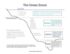 sea life worksheets | ... ocean habitats here . Look at this image ...