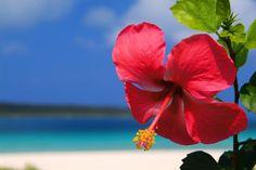 贅沢な島時間を過ごそう!沖縄で行くべきオススメ離島11選