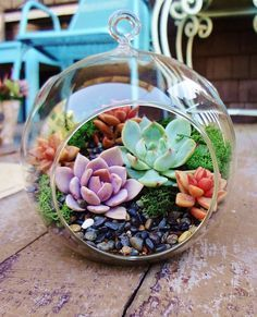 How to Set Up a Succulent Terrarium Terrariums are great for plants that require moist, humid environments. Succulents don't usually prefer these types of conditions. Because succulents use their … Colorful Succulents, Cacti And Succulents, Planting Succulents, Planting Flowers, Succulent Ideas, Colourful Garden Ideas, Succulents Tumblr, Types Of Succulents, Succulent Care