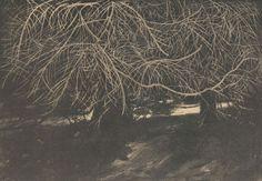 Pnie świerków z siatką suchych splątanych gałęzi - Leon Wyczółkowski