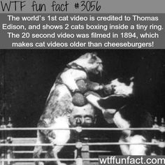 WTF Fun Facts is updated daily with interesting & funny random facts. We post about health, celebs/people, places, animals, history information and much more. New facts all day - every day! Wtf Fun Facts, True Facts, Funny Facts, Funny Memes, Hilarious, Crazy Facts, Random Facts, Odd Facts, Strange Facts