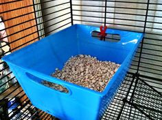 Litter Box Training: How to Potty Train Your Rat - Rat Whisperer - Cage Leash Harness Reviews and Hairless Rat Care