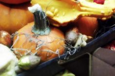 Centerpiece...galvanized chicken feeder filled with gourds, pumpkins and sparkled pecans