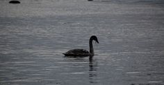 Pildid veest #veeseire #veeseire.ee