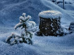 New year came - frost, nature, tree, cold, new tear, snow, winter, holiday, night