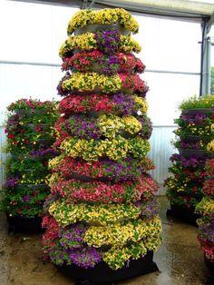 Piramides florales