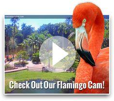 Sarasota Jungle Gardens | Sarasota's Favorite Family Attraction!