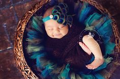 Newborn Photo Gallery 2012 | Silver Bee Photography - peacock