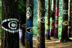 El Bosque de Oma, en la Reserva Natural de Urdaibai (Vizcaya) 10 rincones secretos de España que (seguramente) no conoces