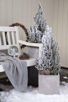 Årets trend er frostede vintergrønne busker.
