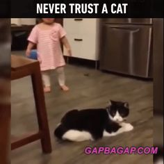 Funny GIF Of Never Trust A Cat