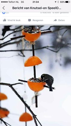Easy Bird Feeders by Ulla Vestola: Use your leftover orange rinds to feed your neighborhood birds. : Easy Bird Feeders by Ulla Vestola: Use your leftover orange rinds to feed your neighborhood birds. Make A Bird Feeder, Bird Feeders, Garden Art, Garden Design, Easy Bird, Nature Crafts, Winter Garden, Garden Projects, Bird Houses