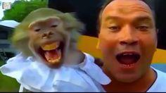 12 สัตว์โลกที่ทำหน้าและเสียงทั้งแปลกทั้งตลก