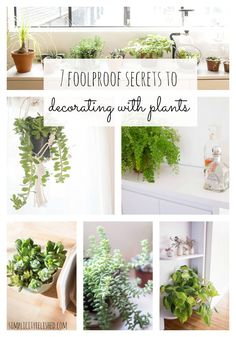 Want to decorte with plants, but don't know where to start? Try these ideas to grow your collection slowly! 7 Foolproof Secrets To Decorating With Plants
