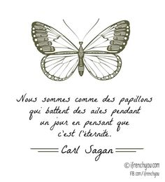 We are like butterflies who flutter for a day and think its forever-Carl Sagan