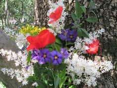 http://raccontareunpaese.blogspot.it/2016/05/ovunque-fiori.html