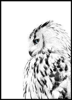 White owl, posters in the group Posters / Formats / at Desenio AB Desenio Posters, Poster Store, Foto Poster, Poster Poster, Owl Photos, Photos Of Animals, Nature Posters, Scandinavian Art, Landscape Photography Tips