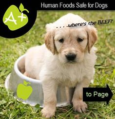 Green Apples for Dogs
