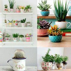 DIY: como reaproveitar xícaras sem uso em uma decoração com suculentas.
