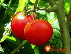 Ako dosiahnuť, aby mali doma vypestované paradajky lepšiu chuť? Nezvyčajné triky skúsených záhradkárov!