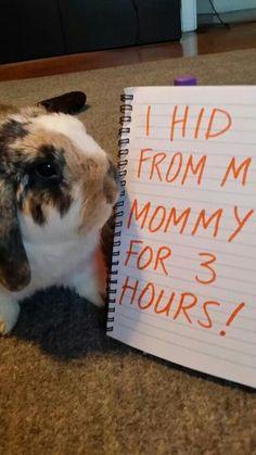 Rabbit shaming! Hiding bunny...