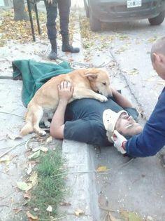 Dieser Hund weigerte sich, seinen Besitzer zu verlassen, der verletzt wurde. Der Welpe war dort bis der Krankenwagen ankam ... mehr dazu ...