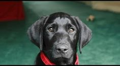 Man's About To Return Shelter Dog When He Reads Previous Owner's Note - Lovely Animals World Shelter Dogs, Animal Shelter, I Love Dogs, Cute Dogs, Black Lab Names, Chihuahua, Clydesdale Horses, Baby Horses, Dog Stories
