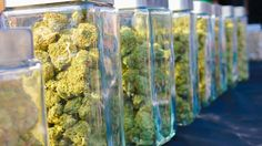 We all know that growing the best plants is a fine art. Visit us at booth #J1 @ the SoCal #CannabisCup