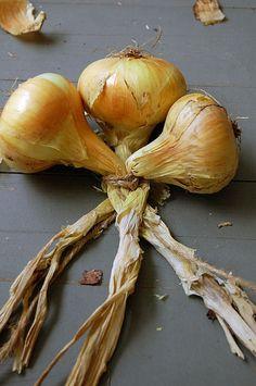 Braiding Onion or Garlic