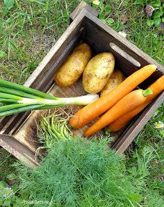 Zupa koperkowa | AniaGotuje.pl Carrots, Vegetables, Food, Carrot, Meal, Eten, Veggie Food, Hoods, Vegetable Recipes