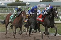 February 21, 2015: #5 Itsaknockout (KY) with jockey Luis Saez on board wins the Fountain Of Youth Stakes G2 by disqualification of #7 Upstart (KY) because of interference in the lane at Gulfstream Park in Hallandale Beach, Florida. Liz Lamont/ESW/CSM
