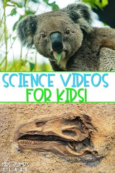 Check out this list of YouTube channels with awesome science videos for kids! Perfect for the primary classroom. #sciencevideos #kidyoutube #scienceintheclassroom