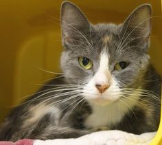 ADOPTED>Intake: 9/1 Available: Now  NAME: Ashes  ANIMAL ID: 33363960 BREED: DSH SEX: Female  EST. AGE: 2 yrs  Est Weight: 6 lbs Health:  Temperament: Friendly ADDITIONAL INFO: O/S  RESCUE PULL FEE: $35