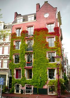Amsterdam. Been and would love to go back. Love letting the house and nature co-exist! : )