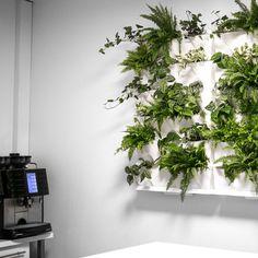 Plantwall modular system from Minigarden.