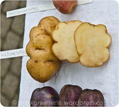 Ein verlassenes Kürbisfeld und die Kartoffel-Ausstellung zum Erntedankfest
