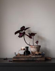 Still life_winter mood_Daniella Witte. Rustic Chic, Modern Rustic, Rustic Decor, Wabi Sabi, Autumn Inspiration, Home Decor Inspiration, Modern Interior, Interior Design, Cocoon