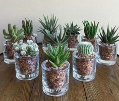 succulents mason jar succulents centerpiece succulents indoor succulents in c Pflanzideen Mason Jar Succulents, Succulent Centerpieces, Succulents In Containers, Cacti And Succulents, Planting Succulents, Cactus Plants, Planting Flowers, Cactus Decor, Flowers Garden