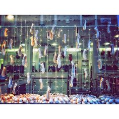 What a beautiful window display! Using pointe shoes and Christmas lights is so creative.