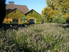 Palo Alto barn #beautiful #nature #california
