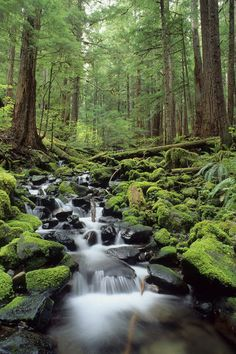 Soleduck Valley, Olympic National Park, Washington.... summer 2013, yes!
