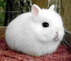 bebe-animal-mignon-01.jpg (605×527)