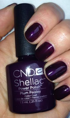 New Plum Paisley Shellac Oh look! It's the color I just had done :)