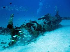 Dove the Corsair plane wreck in 115 feet of blue Pacific Hawaiian waters.