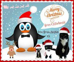 CATachresis: Our colourful Christmas card!