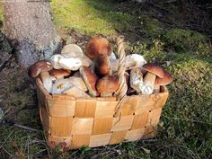 Finland is mushroom picker's paradise. Scandinavian Food, Stuffed Mushrooms, Wild Mushrooms, Mushroom Recipes, Helsinki, Farm Life, Raw Food Recipes, Country Living, Summertime